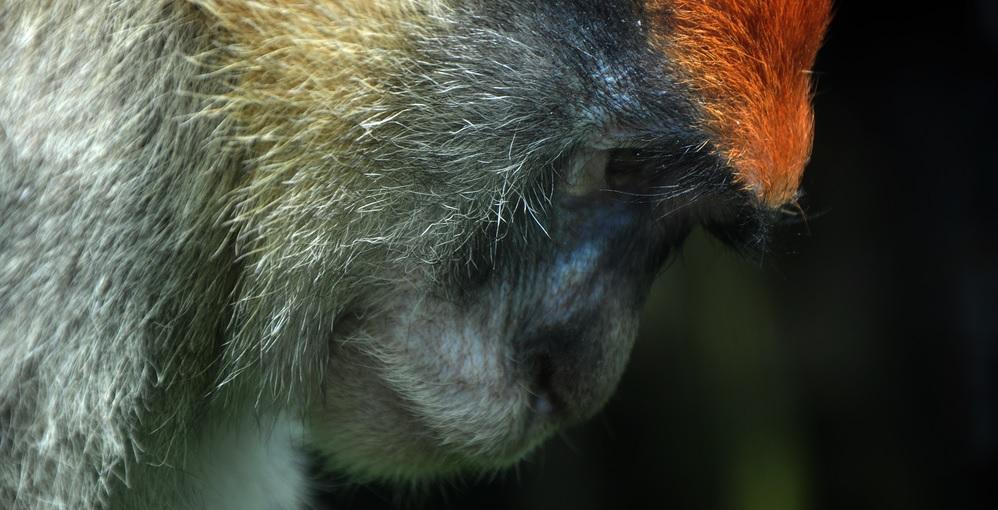 rc-monkey